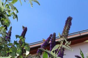 Schmetterlinge 6Cornelia Hauch