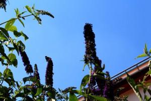 Schmetterlinge 7Cornelia Hauch